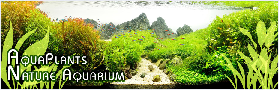 Aqua Plants Nature Aquarium